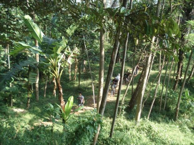 hutan rimbun