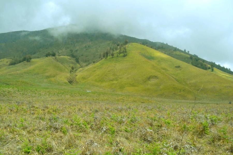 bukit teletubbies yang menguning cantik