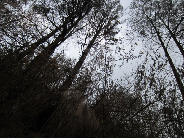 hutan mendung (foto-adhib)