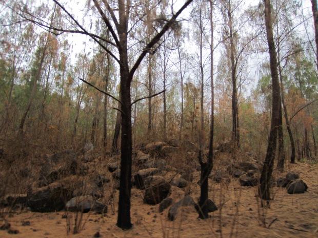 dasar hutan  yang kering