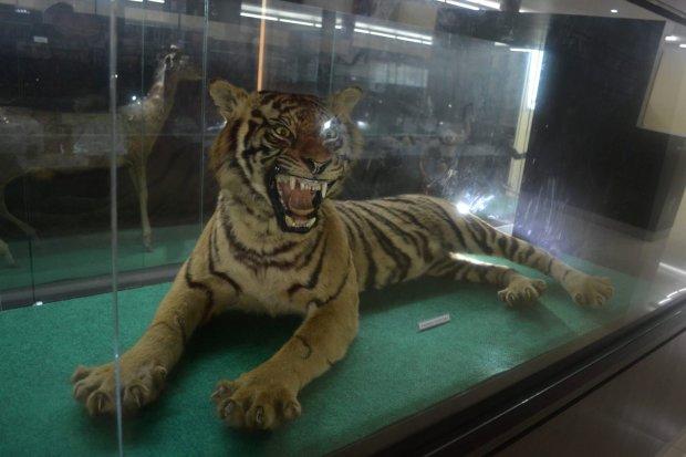 macan yang diairkeraskan