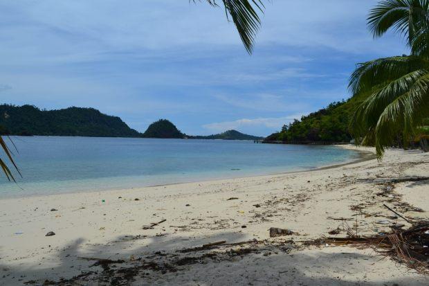 tepian pantai yang banyak pelepah kering