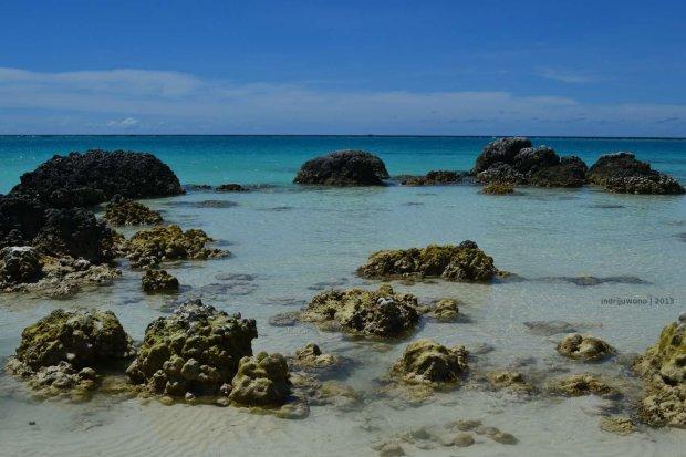 terumbu karang yang naik ke permukaan