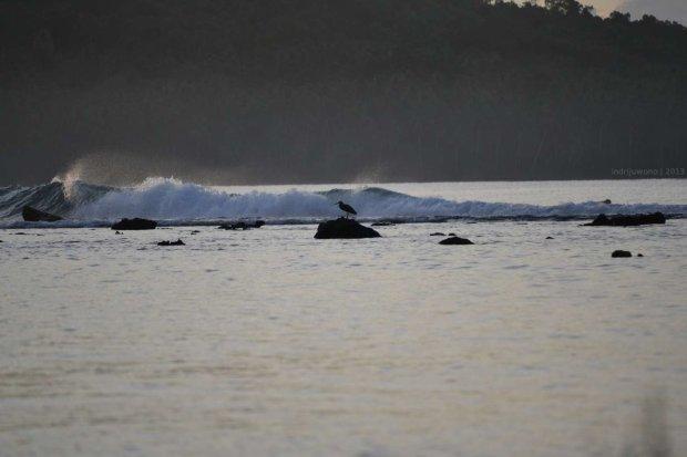 camar laut yang bertengger di batu