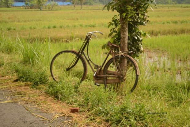 sepeda petani
