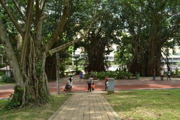lintasan kaki dalam dalam tudungan rerimbun pohon