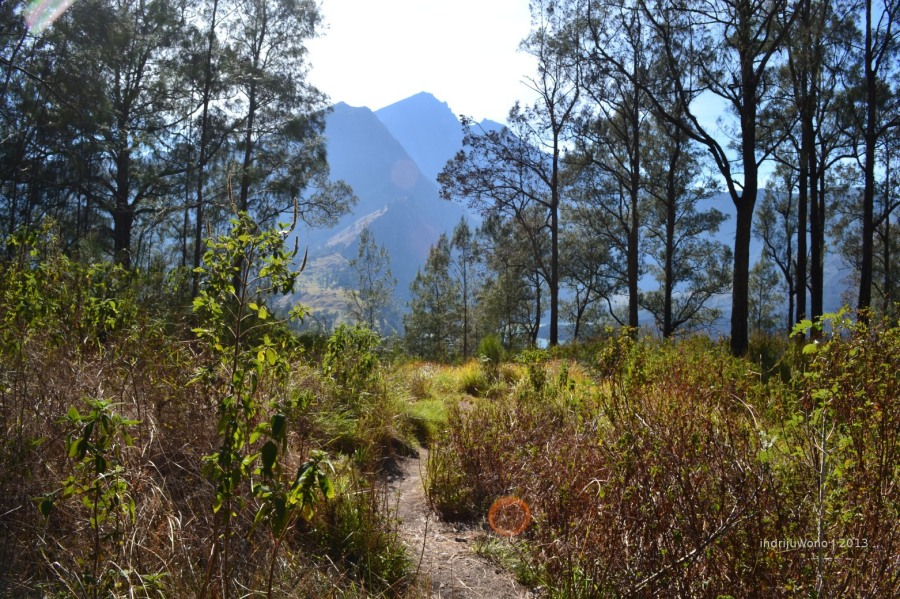 hutan pendakian