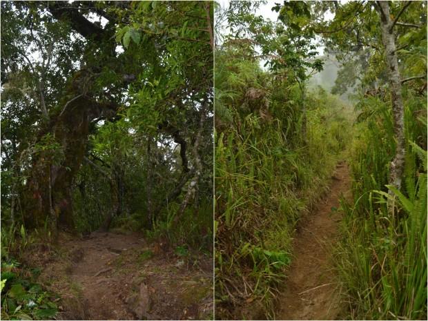 jalan setapak menuju desa senaru