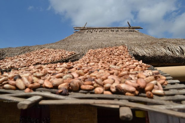 di atap, banyak yang menjemur buah kakao