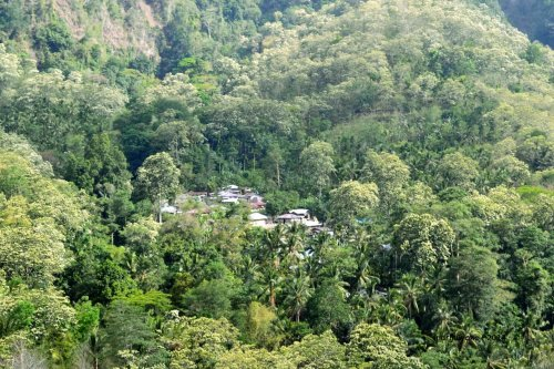 desa di tengah hutan kemiri