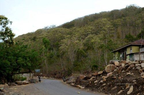 hutan kemiri menggerumbul