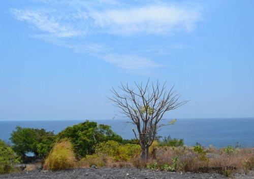 pohon meranggas sendiri di perjalanan