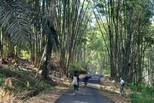 hutan bambu di jalan