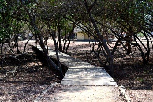 selasar kayu melintasi terowongan pohon