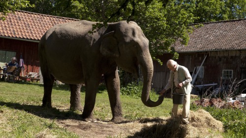 meet the elephant (pic from butlercinemascene)