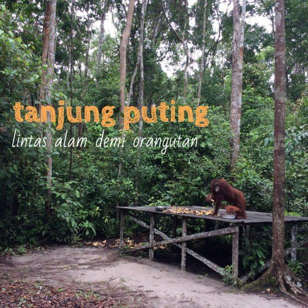 0-cover-orangutan
