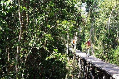 jembatan kayu ke camp leakey