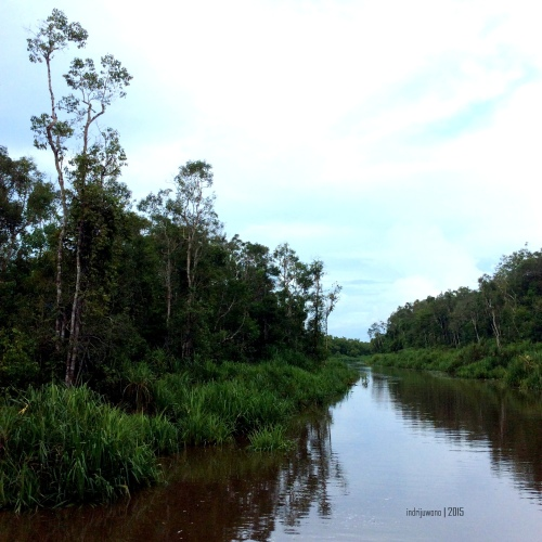 1-tanjungputing-sungai-sekonyer