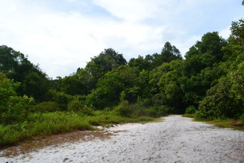 pasir putih di tengah hutan