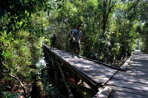 harus melalui jembatan yang didirikan di atas rawa