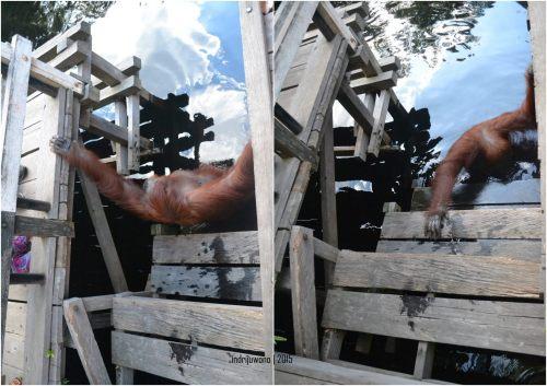 31-tanjungputing-camp-leakey-orangutan-siswi-bath
