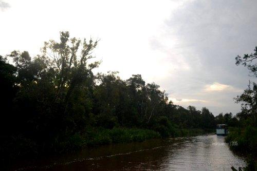 32-tanjungputing-tanjung-harapan-river