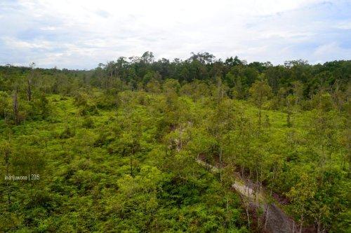 hutan dari atas