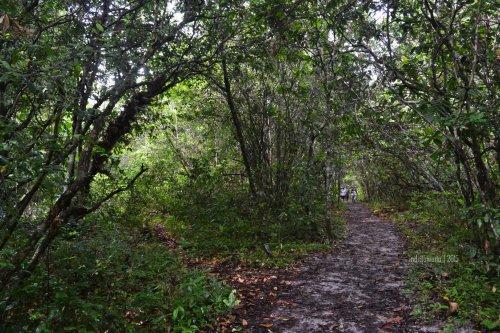 jalur trekking yang agak becek