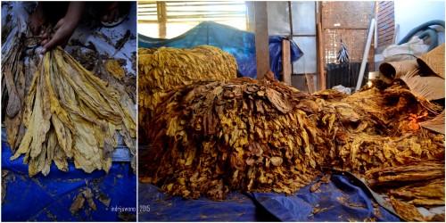 tembakau kering yang siap dikirim ke gudang
