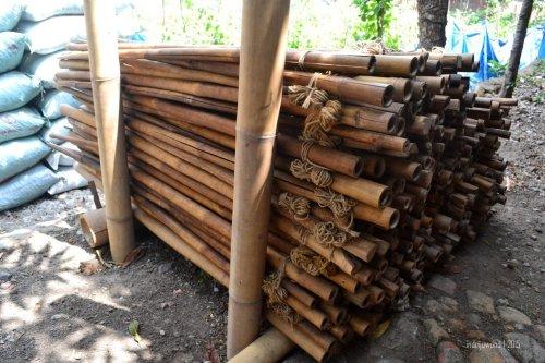 gelantang bambu untuk merangkai tembakau