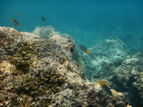 10-mandeh-sumatera-barat-dive-under-water-coral