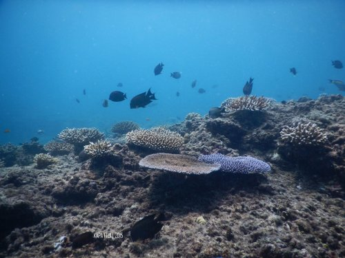 12-mandeh-sumatera-barat-dive-under-water-coral