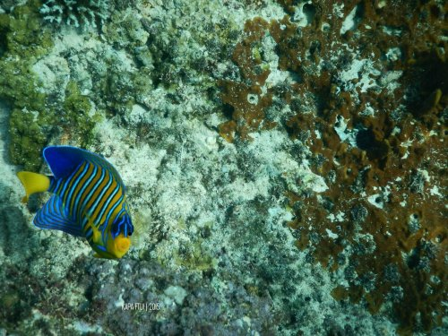 13-mandeh-sumatera-barat-dive-under-water-fish
