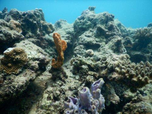 20-mandeh-sumatera-barat-laut-boeloengan-dive-under-water