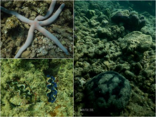 25-mandeh-sumatera-barat-laut-boeloengan-dive-under-water