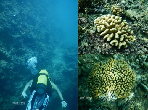 40-mandeh-sumatera-barat-sronjong-cubadak-dive-under-water