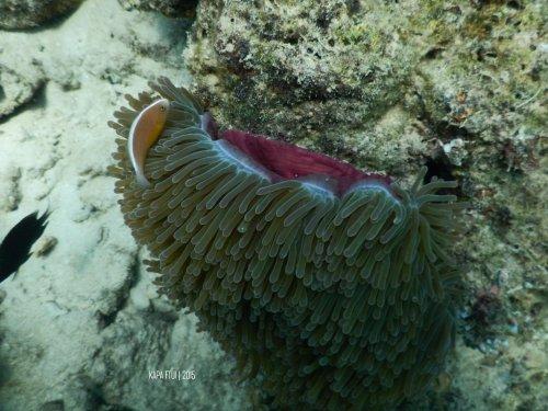 42-mandeh-sumatera-barat-sronjong-cubadak-dive-under-water