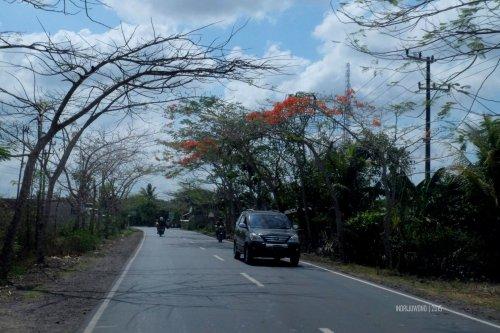 flamboyan-lombok-1