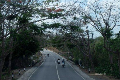 flamboyan-lombok-2