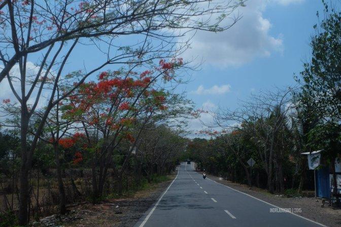 mendamba flamboyan di lombok selatan