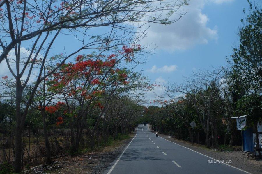 flamboyan-lombok-8