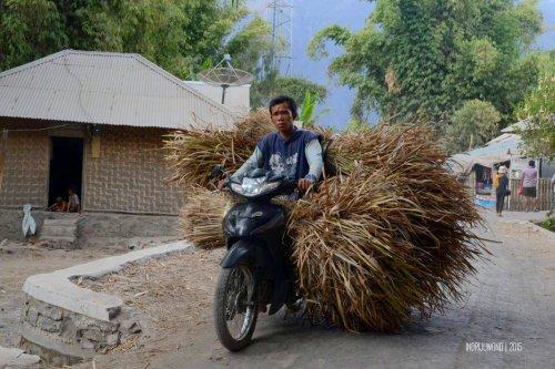 1-sembalun-lombok-penduduk-ilalang
