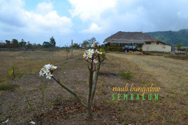 11-nauli-bungalow-sembalun-lombok-pekarangan