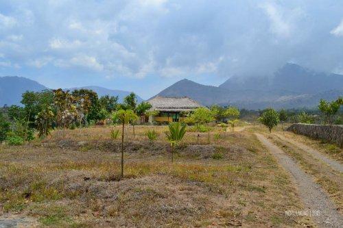 15-nauli-bungalow-sembalun-lombok-pekarangan