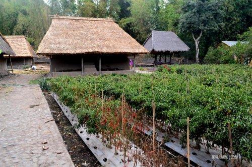 24-lombok-sembalun-lawang-desa-adat-beleq-blek-kebun