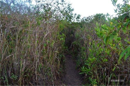4-bukit-pergasingan-padang-kering