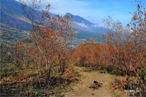 9-bukit-pergasingan-jalur-menurun-hutan-kering