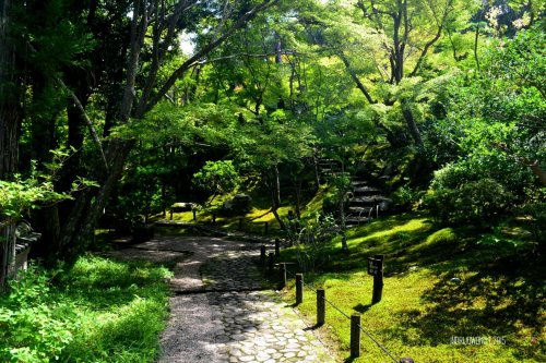 24-nara-japan-Yoshikien-Garden
