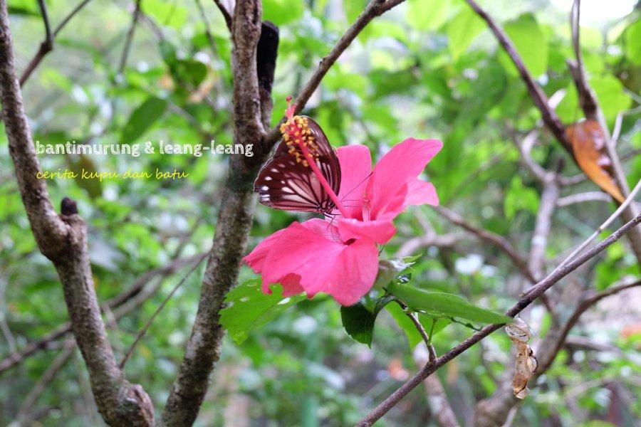 0-cover-bantimurung-leang-leang-kupu-kupu