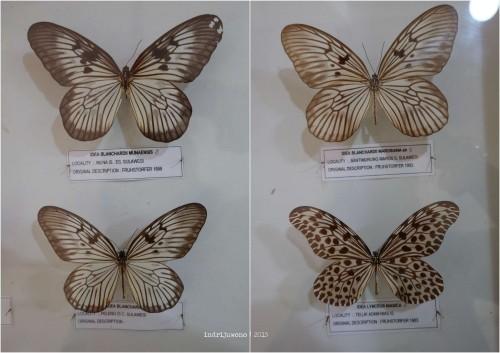 1-bantimurung-leang-leang-kupu-kupu